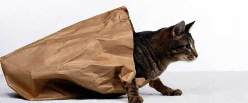 A tabby cat crawls out from inside a paper bag
