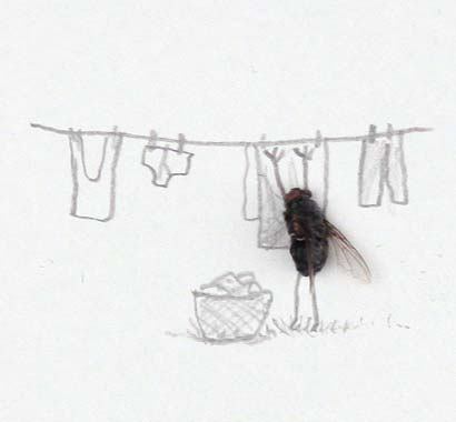 A dead fly hangs up the washing