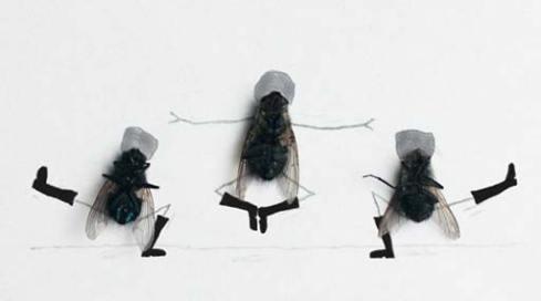 Dead flies kicking up their heels