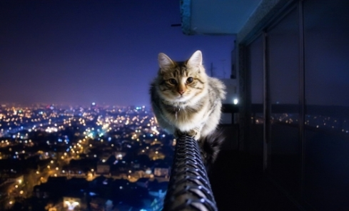 Cat sitting on a balcony railing